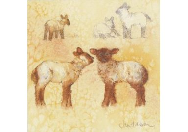 "Carte aquarelle "" Etude de moutons """