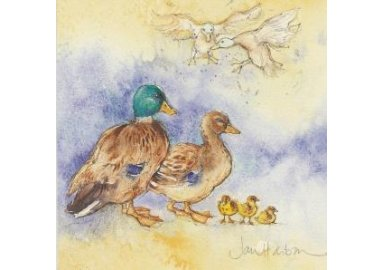 "Carte aquarelle "" Etude de canards """